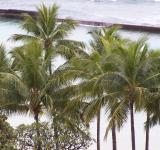 Free Photo - Palm Trees and breakwater