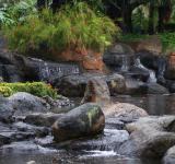 Free Photo - Tropical Water Garden