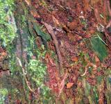 Free Photo - Tree bark with plant growth