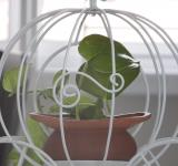 Free Photo - Carriage Plant Holder