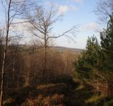 Free Photo - Forest View