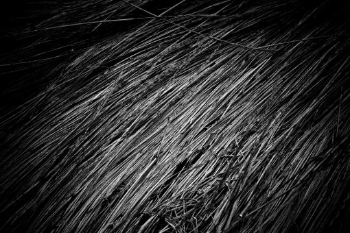 Fallen Straws Texture - Free Stock Photo