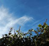 Free Photo - Ivy against the sky