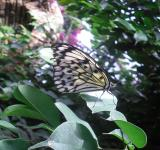 Free Photo - Paper Kite Butterfly