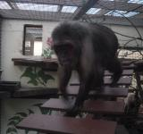 Free Photo - Macaque