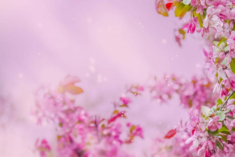 Blossom Free Stock Photo