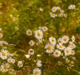 Free Photo - Daisy field