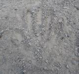 Free Photo - Hand print in gravel