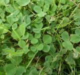 Free Photo - Clover leaves and grass