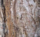 Free Photo - Tree trunk