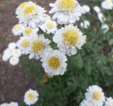 Free Photo - White and yellow flowers