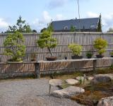 Free Photo - Bonsai garden