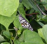 Free Photo - A white butterfly