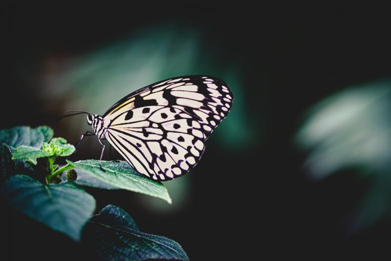 Free Stock Photo of White Butterfly Created by Bjorgvin