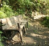 Free Photo - Abandoned bench in the forest