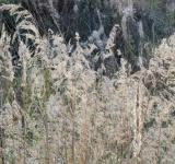 Free Photo - Dried autumn reed