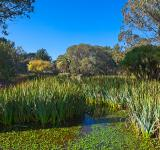 Free Photo - Zoo Marsh Scenery - HDR