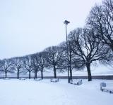 Free Photo - Trees at winter