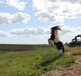 Free Photo - Gypsy vanner stallion
