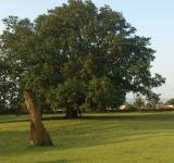 Free Photo - Beautiful Tree in Golf course