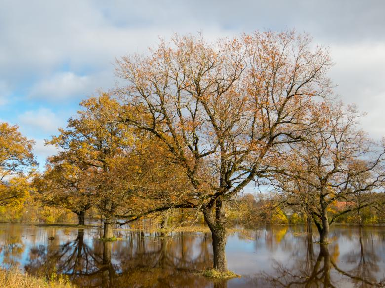 Free Stock Photo of Fall and too much rain. A little floods Created by Janis Urtans