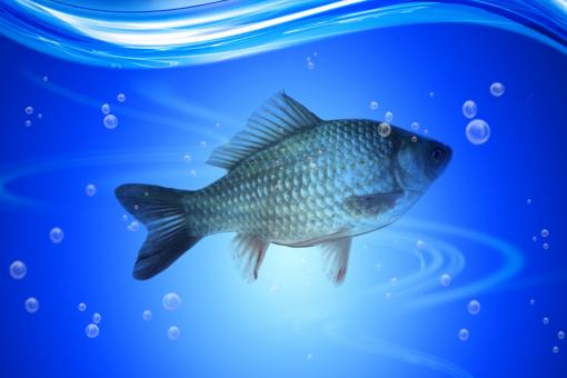 Fish under water - Free Stock Photo