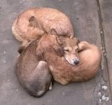 Free Photo - Three dogs sleeping