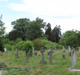 Free Photo - Overgrown Cemetery