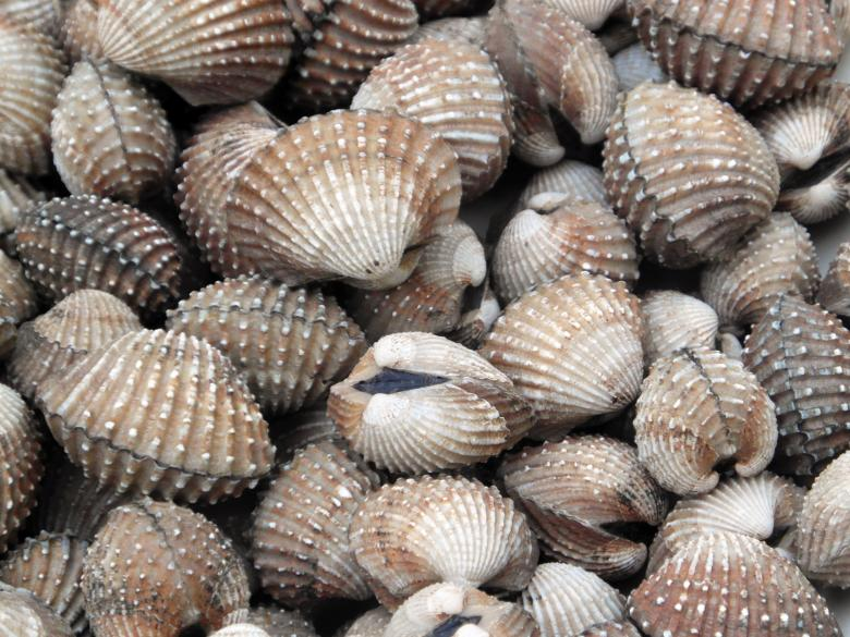 Free Stock Photo of Cockles Created by Ivan