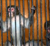 Free Photo - Monkey behind bars