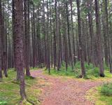 Free Photo - The Forest Trails