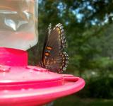Free Photo - Butterfly Feeder