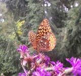 Free Photo - B Is For Butterfly