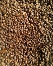 Free Photo - Roasted coffee beans