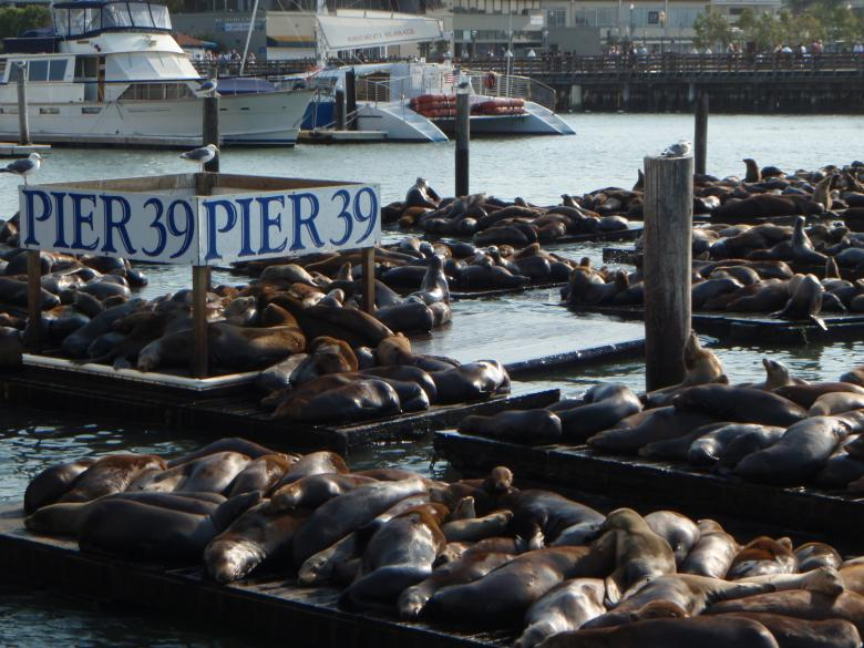 Free Stock Photo of Pier 39 Created by Wady Galfskiy