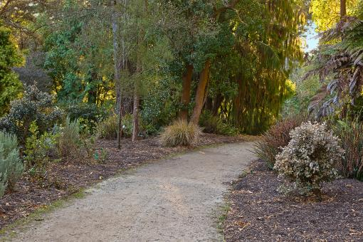 Botanical Gardens Trail - HDR - Free Stock Photo