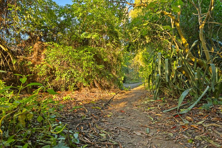 Free Stock Photo of Botanical Gardens Trail - HDR Created by Nicolas Raymond