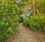 Free Photo - Botanical Gardens Trail - HDR