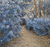 Free Photo - Botanical Gardens Trail - Winter Blue HD