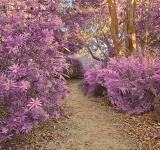 Free Photo - Botanical Gardens Trail - Ultra Violet H