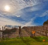Free Photo - Sonoma Valley Vineyard - HDR