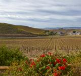 Free Photo - Sonoma Valley Scenery - HDR