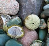 Free Photo - Sea Urchin