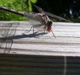 Free Photo - The Dragonfly vs The Ladybug