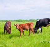 Free Photo - Cows on farmland