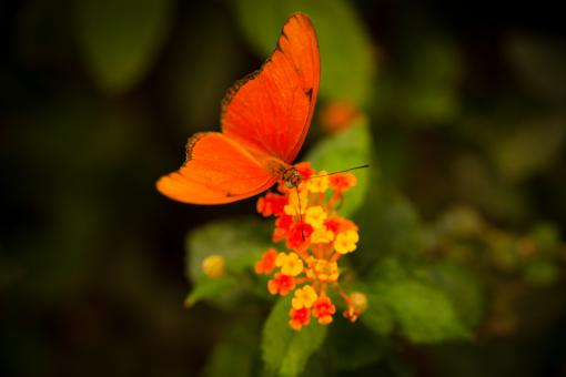 Orange Butterfly - Free Stock Photo