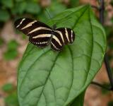 Free Photo - Butterfly on leaf