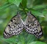 Free Photo - Butterfly Love