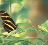 Free Photo - Butterfly in leaves