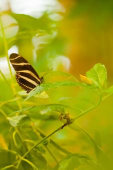 Butterfly in leaves - Free Stock Photo